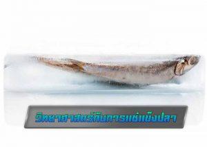 วิทยาศาสตร์กับการแช่แข็งปลา